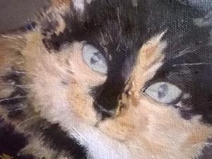 Kattporträtt av Pipen